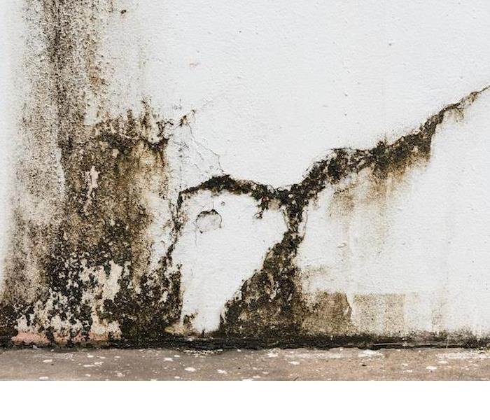 Mold Remediation A Quick Primer on Mold
